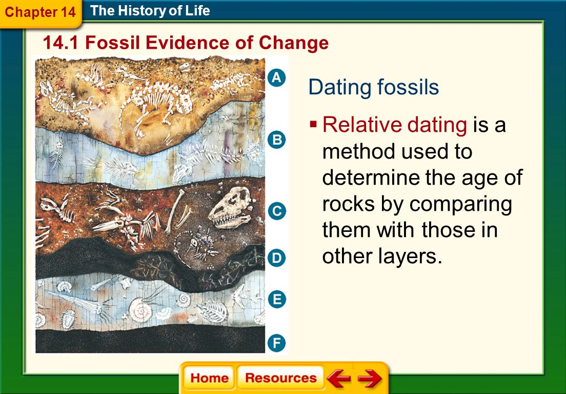 Chapter 14 The History of Life. 14.1 Fossil Evidence of Change. Dating fossils.