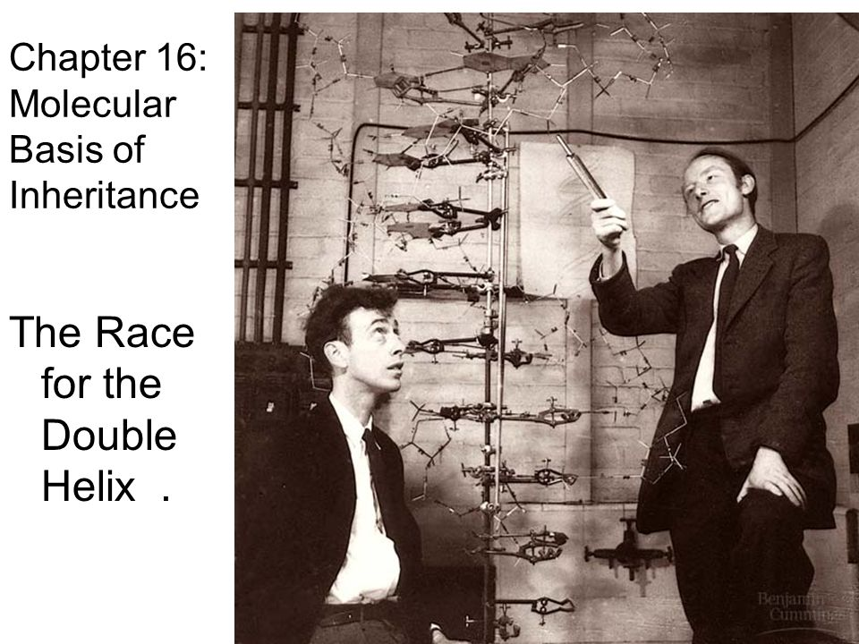 race for the double helix an analysis