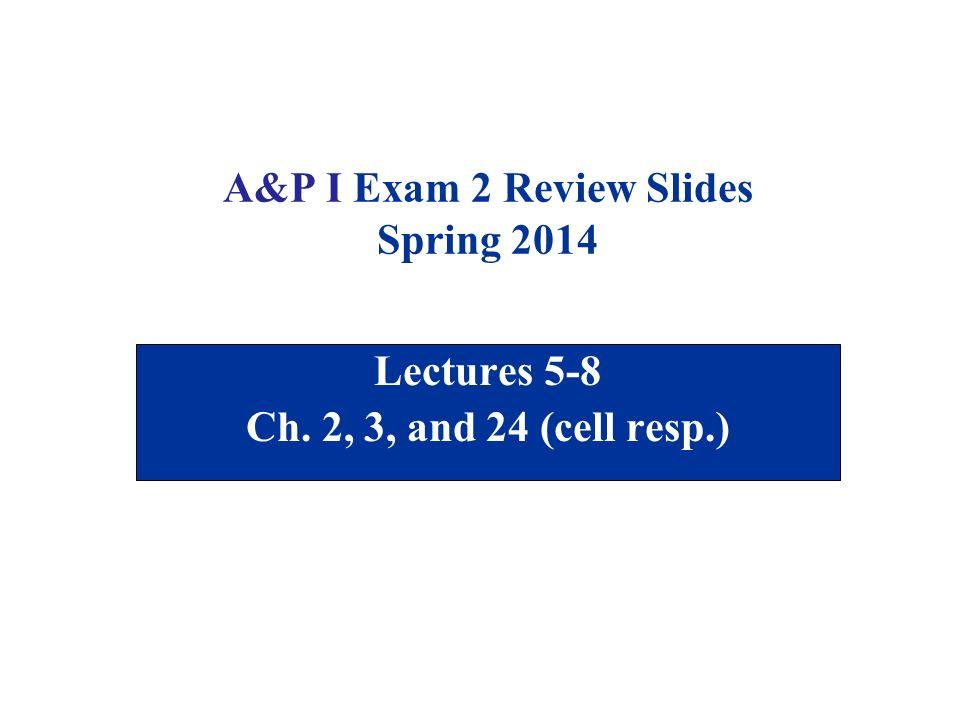 A&P I Exam 2 Review Slides Spring ppt download
