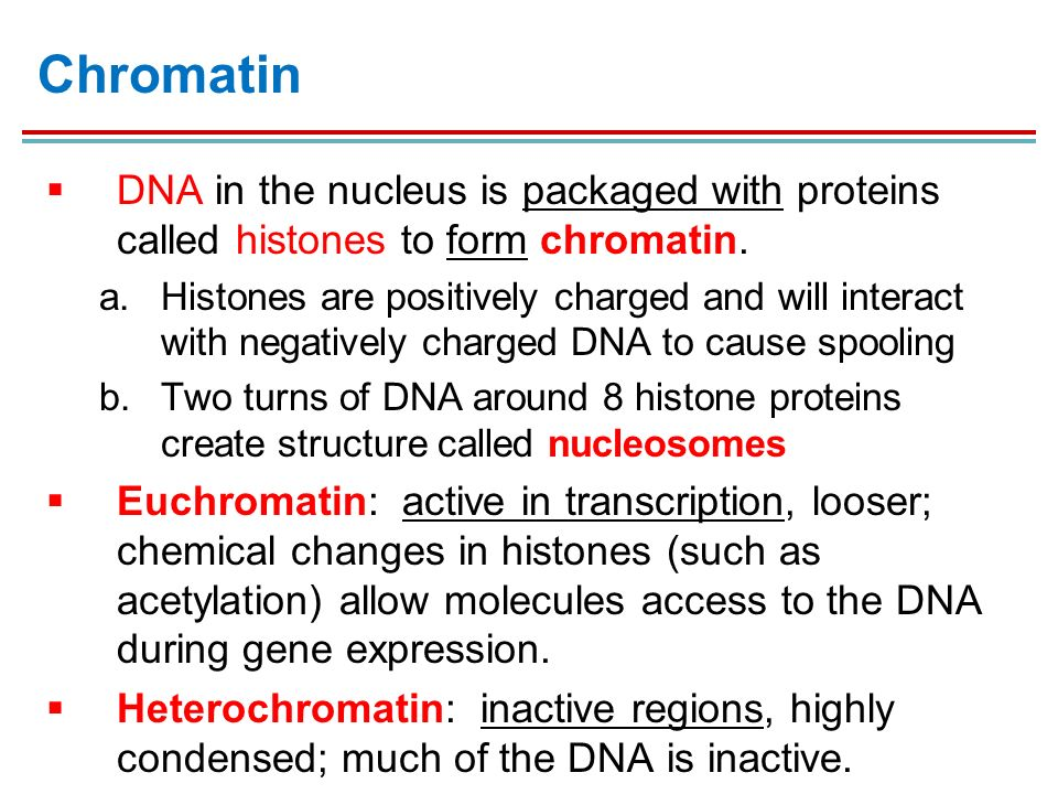 cell structure and genetic control ppt download