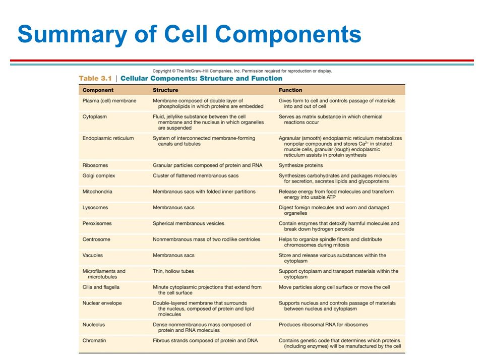 Brief notes on cell organization and