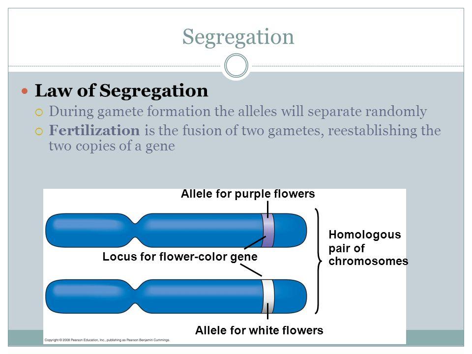 Segregation Law of Segregation