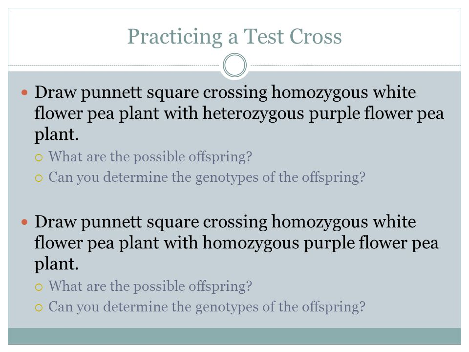 Practicing a Test Cross