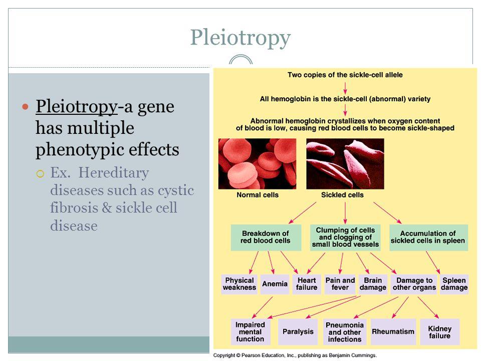 Pleiotropy Pleiotropy-a gene has multiple phenotypic effects