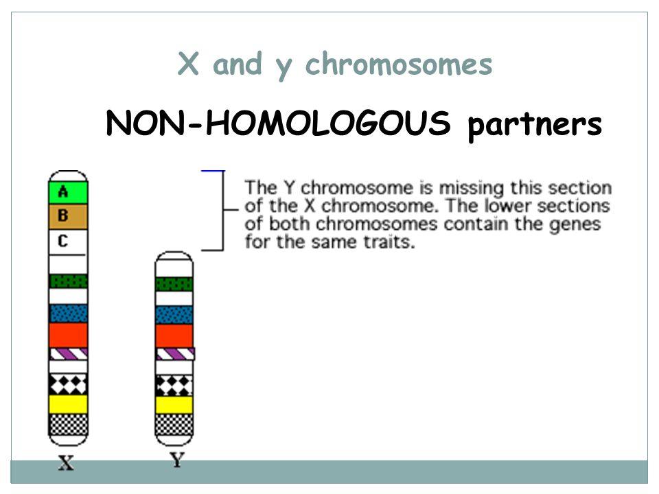 NON-HOMOLOGOUS partners