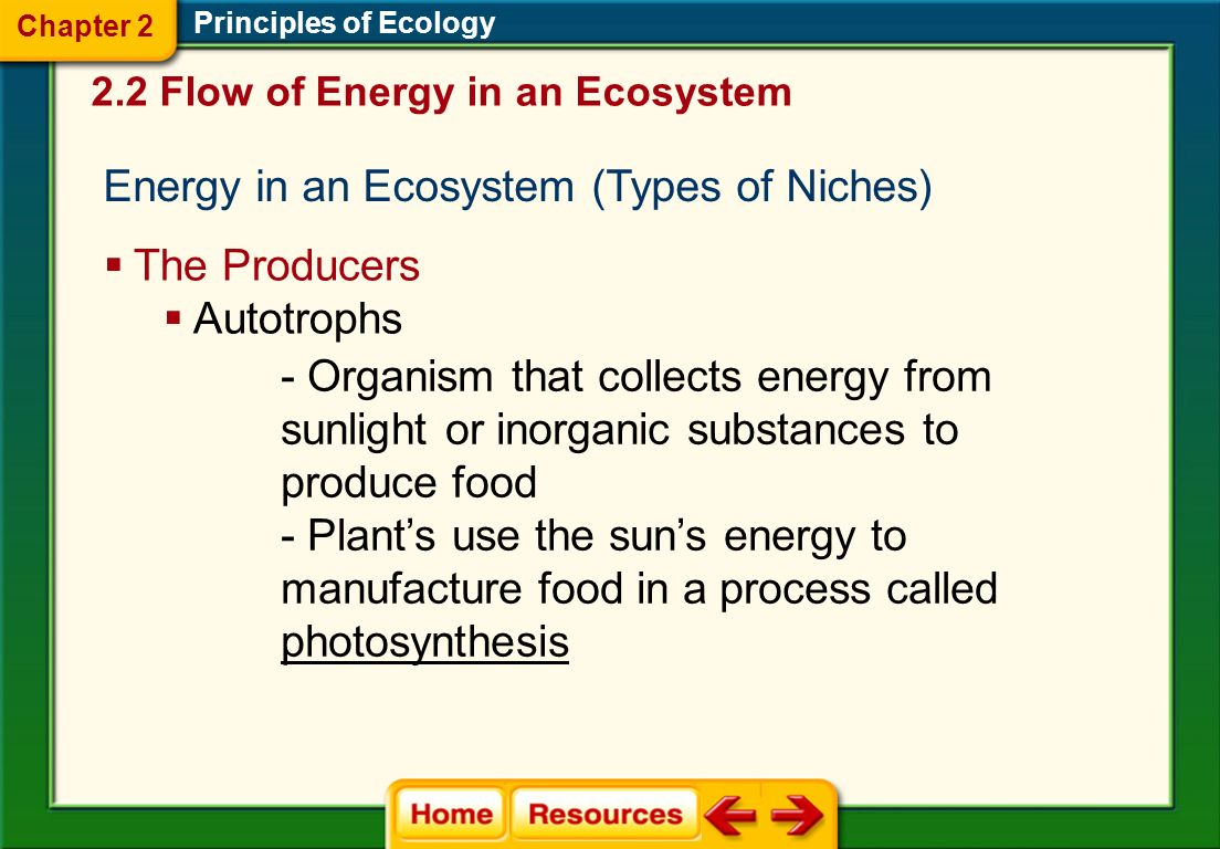 Energy in an Ecosystem (Types of Niches)