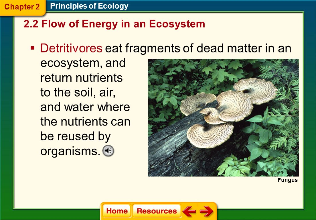 Detritivores eat fragments of dead matter in an