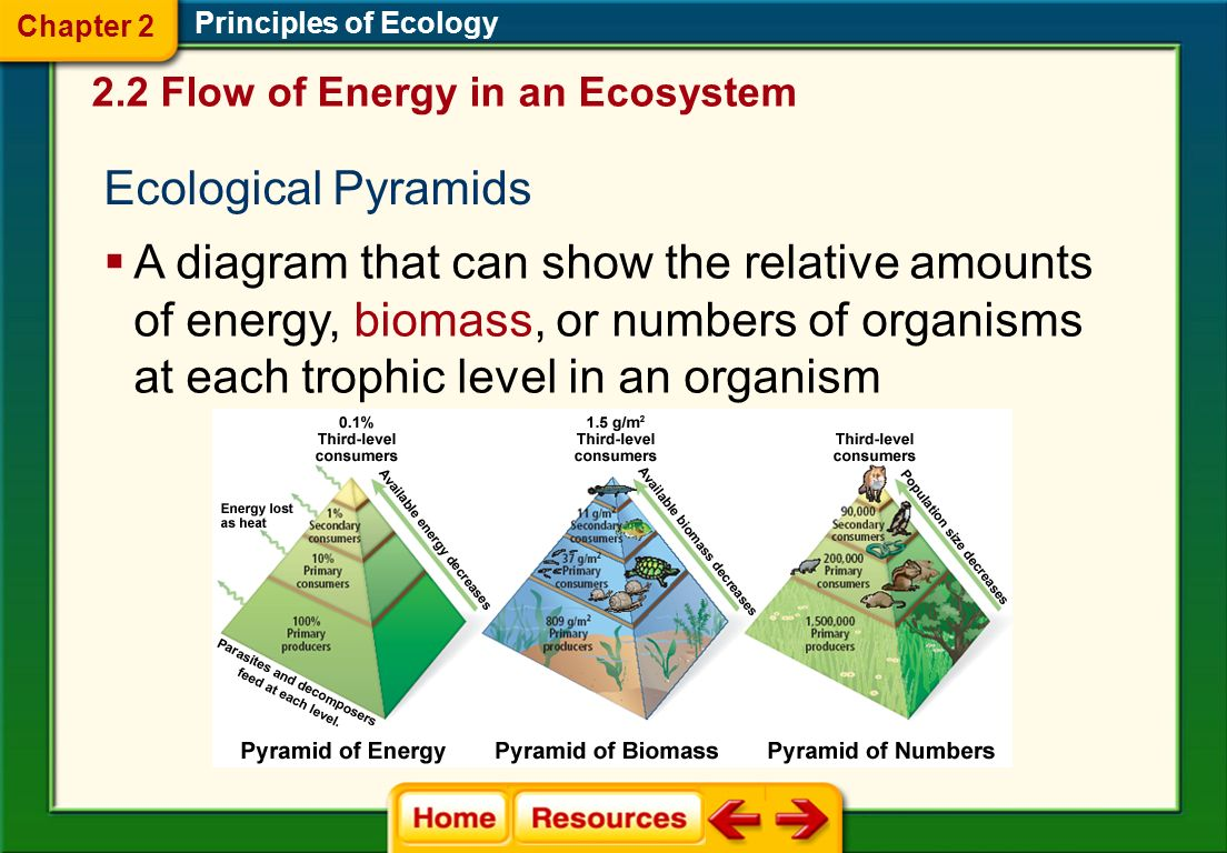 Chapter 2 Principles of Ecology. 2.2 Flow of Energy in an Ecosystem. Ecological Pyramids.