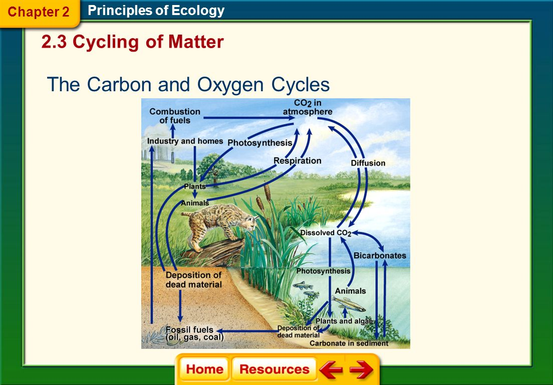The Carbon and Oxygen Cycles