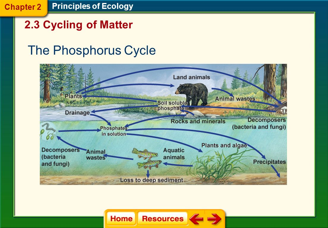 The Phosphorus Cycle 2.3 Cycling of Matter Chapter 2