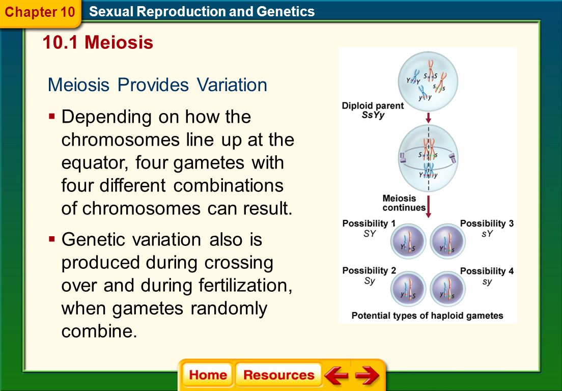 Meiosis Provides Variation