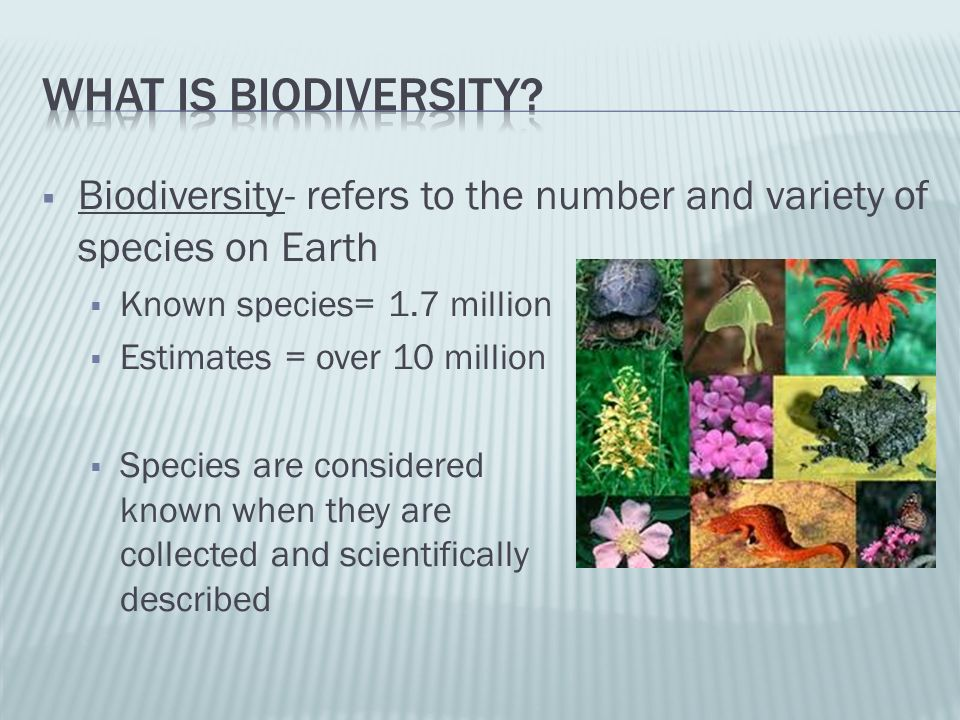 What is biodiversity Biodiversity- refers to the number and variety of species on Earth. Known species= 1.7 million.