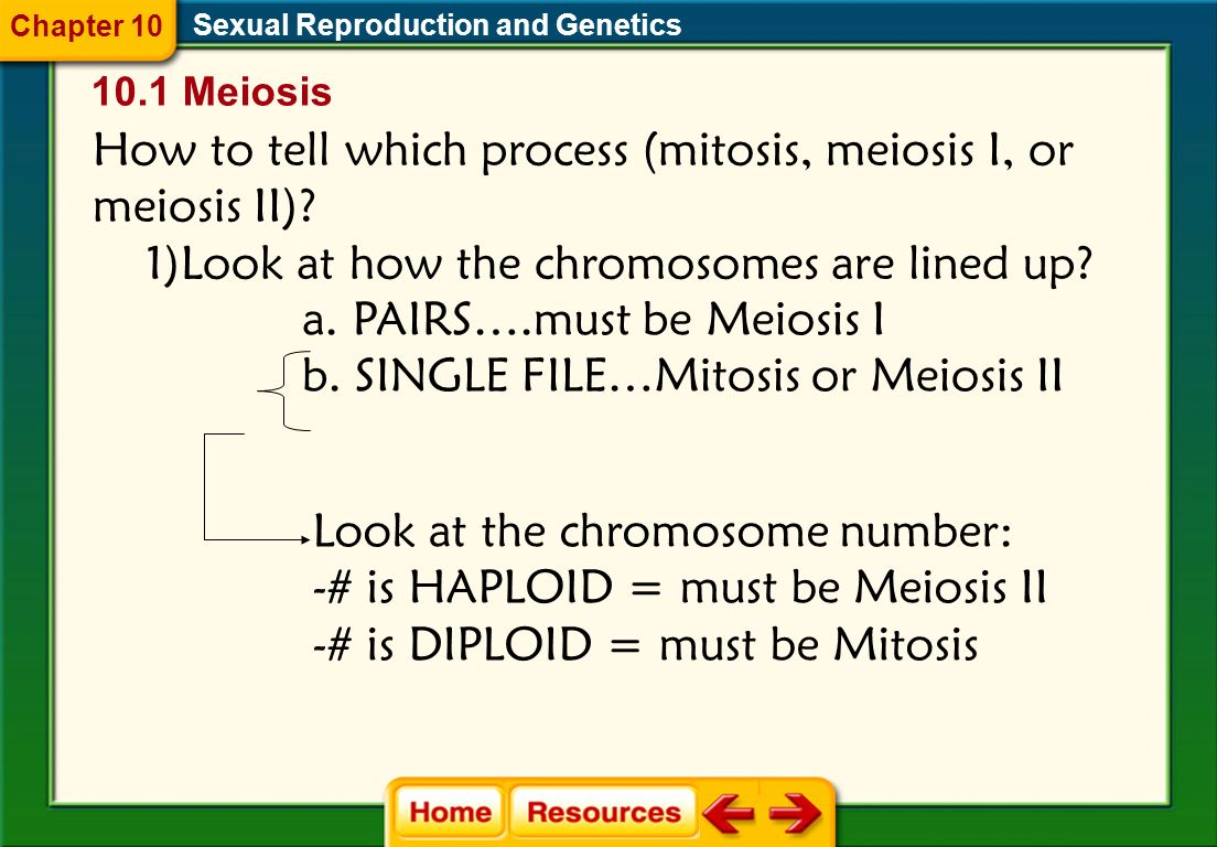 How to tell which process (mitosis, meiosis I, or meiosis II)