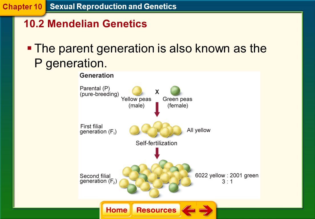 The parent generation is also known as the P generation.