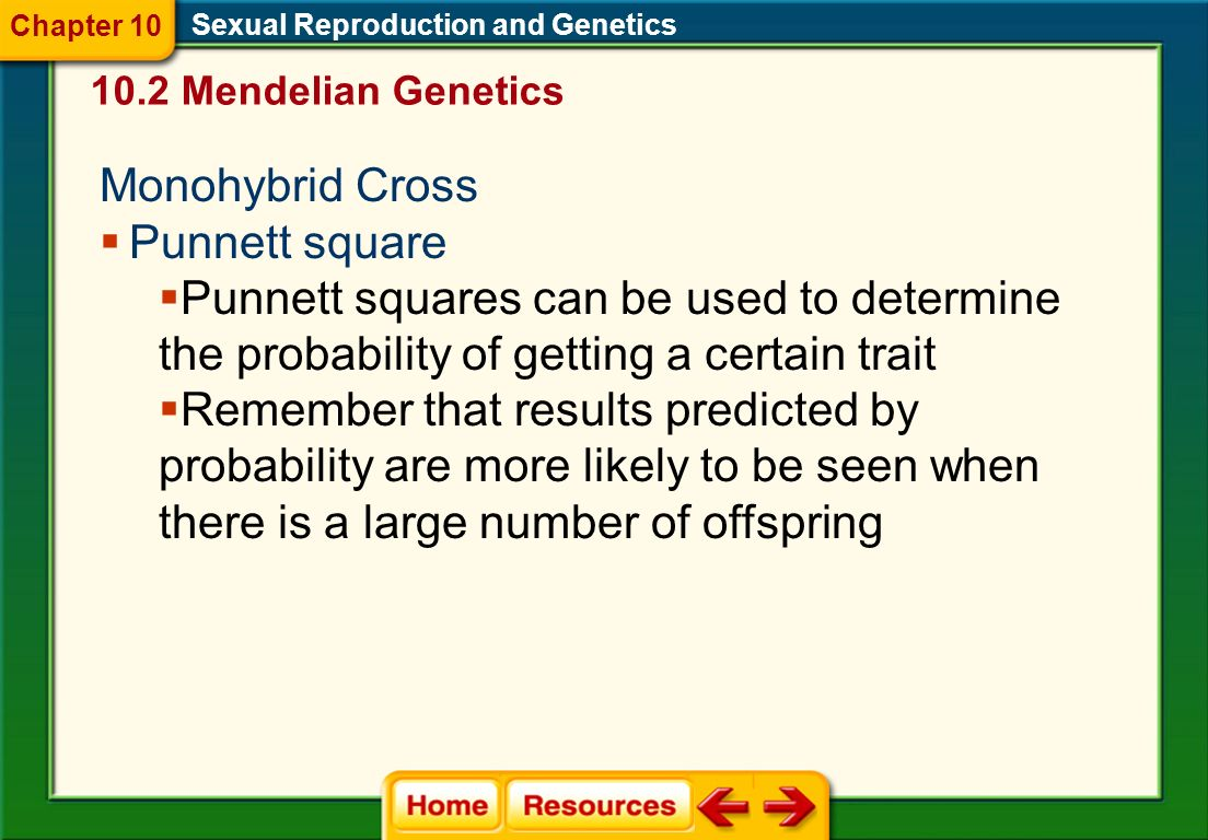Monohybrid Cross Punnett square