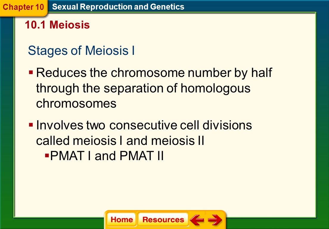 Chapter 10 Sexual Reproduction and Genetics. 10.1 Meiosis. Stages of Meiosis I.