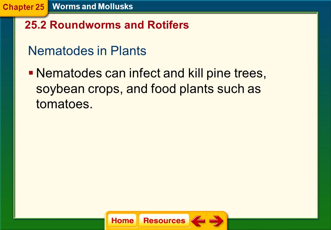 Chapter 25 Worms and Mollusks. 25.2 Roundworms and Rotifers. Nematodes in Plants.