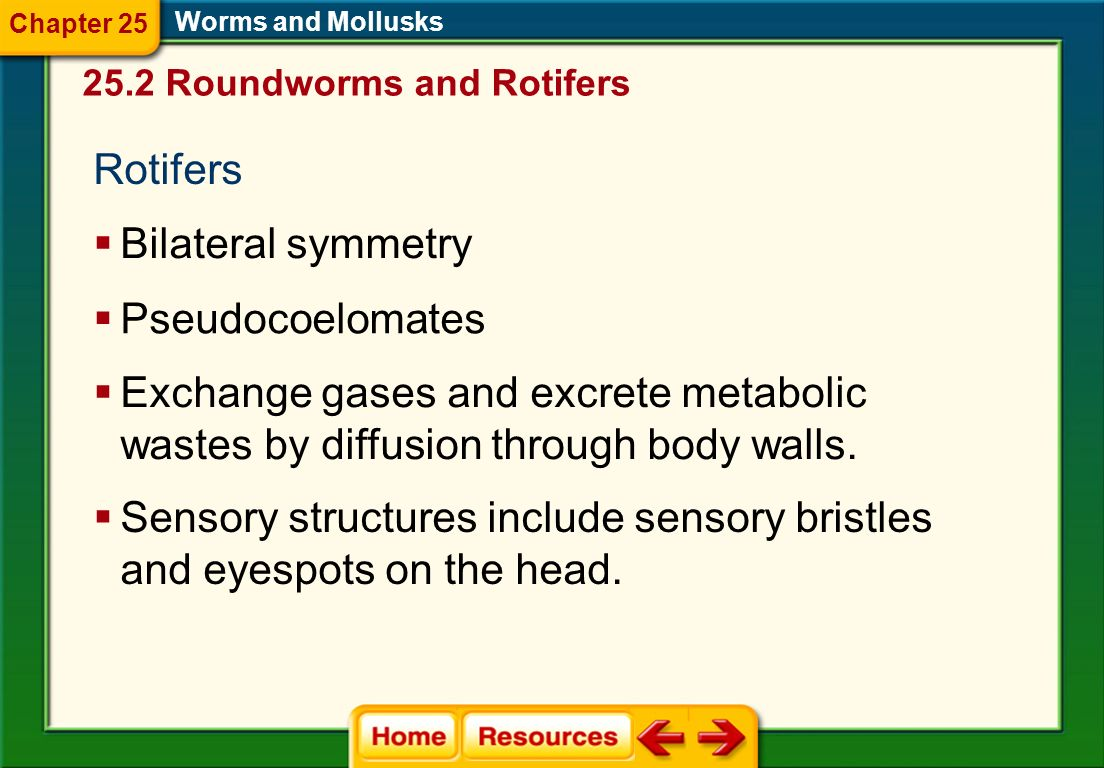 Sensory structures include sensory bristles and eyespots on the head.