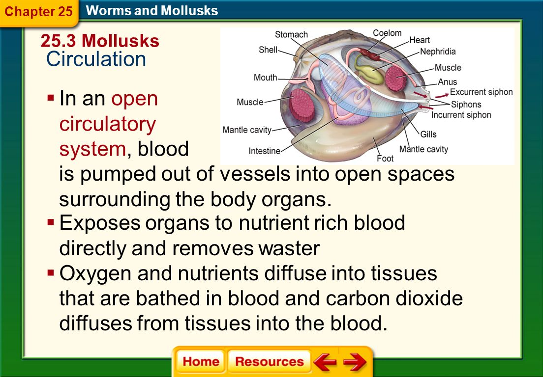 is pumped out of vessels into open spaces surrounding the body organs.
