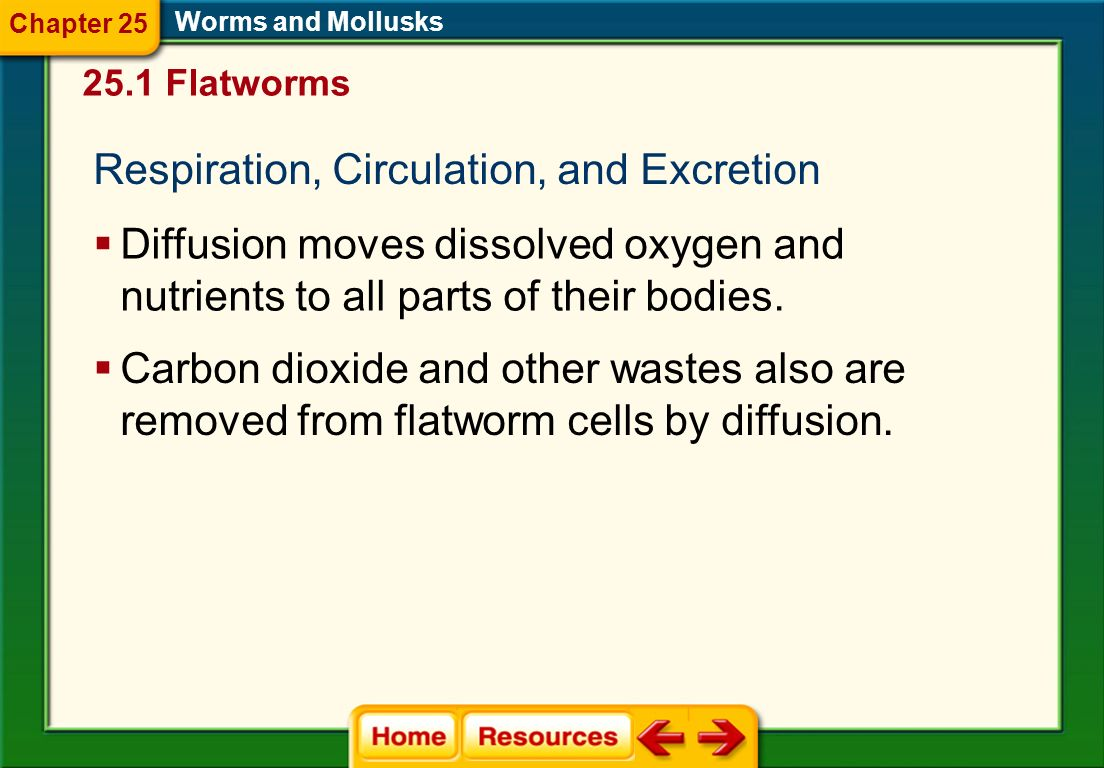 Respiration, Circulation, and Excretion