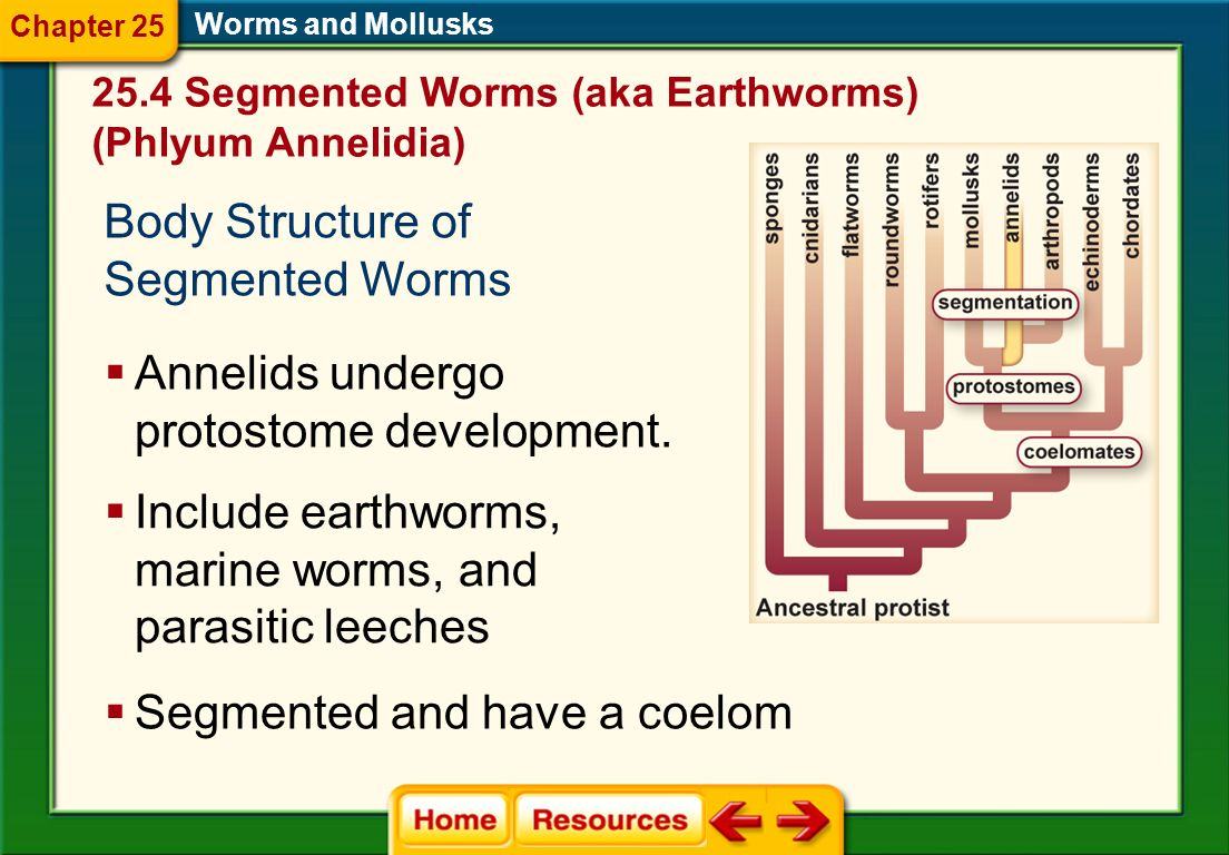Body Structure of Segmented Worms