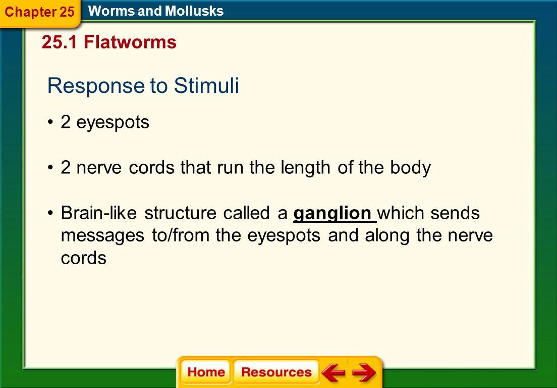 Response to Stimuli 25.1 Flatworms 2 eyespots