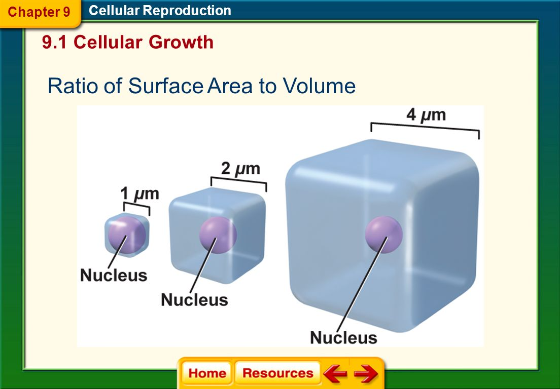 Ratio of Surface Area to Volume