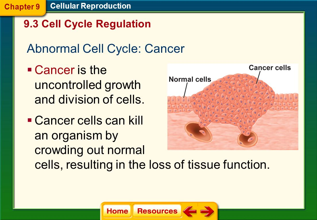 Abnormal Cell Cycle: Cancer