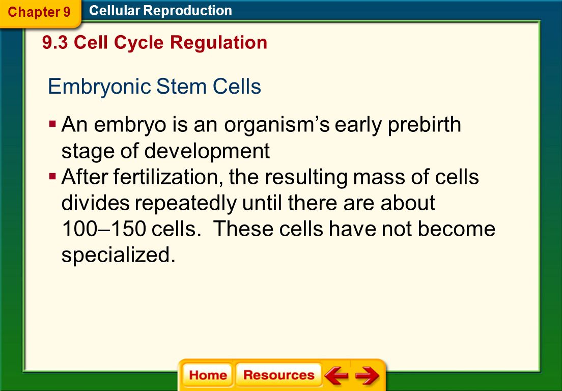 An embryo is an organism's early prebirth stage of development