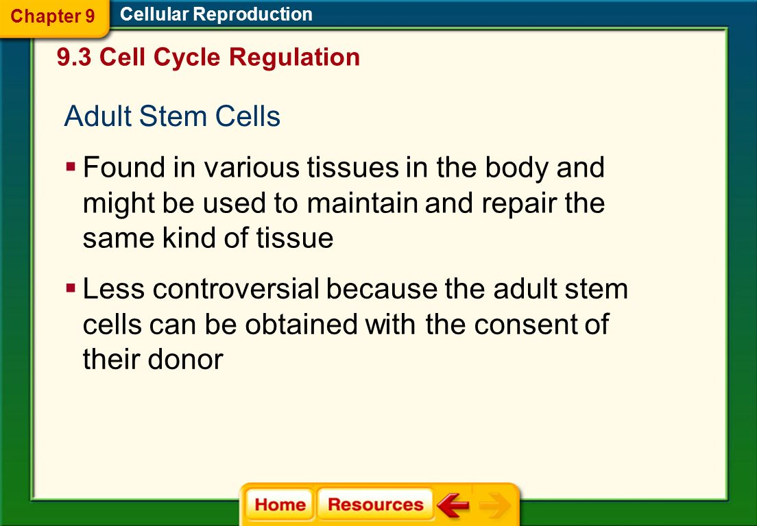 Chapter 9Cellular Reproduction. 9.3 Cell Cycle Regulation. Adult Stem Cells.