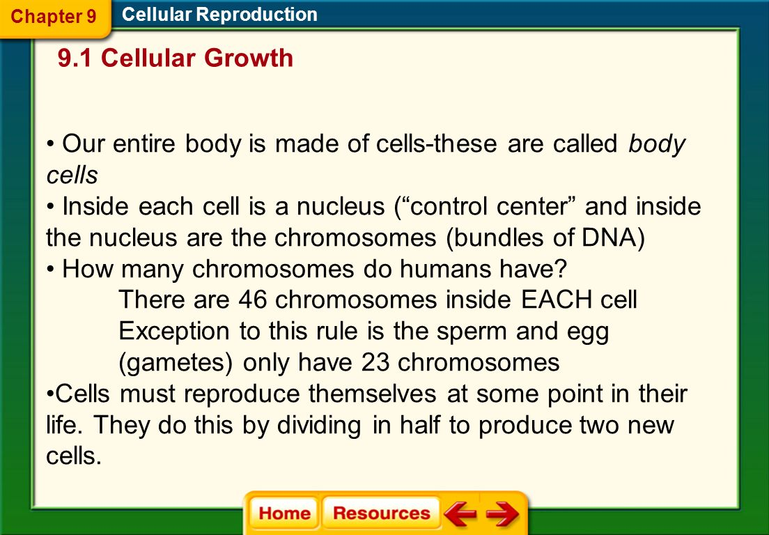 Our entire body is made of cells-these are called body cells