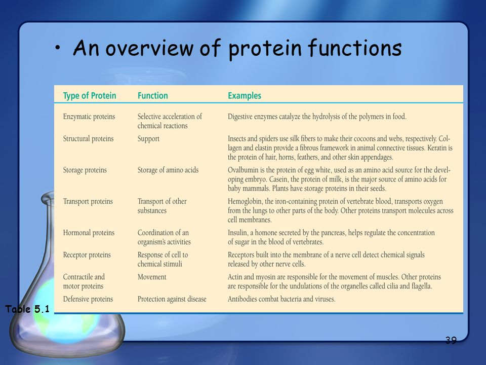 An overview of protein functions