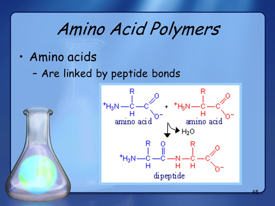 Amino Acid Polymers Amino acids Are linked by peptide bonds