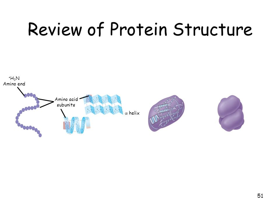Review of Protein Structure