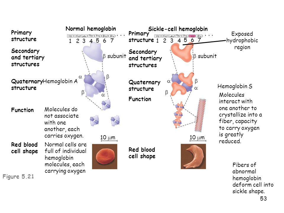 Sickle-cell hemoglobin