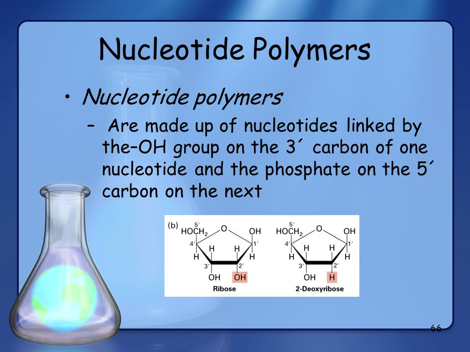 Nucleotide Polymers Nucleotide polymers