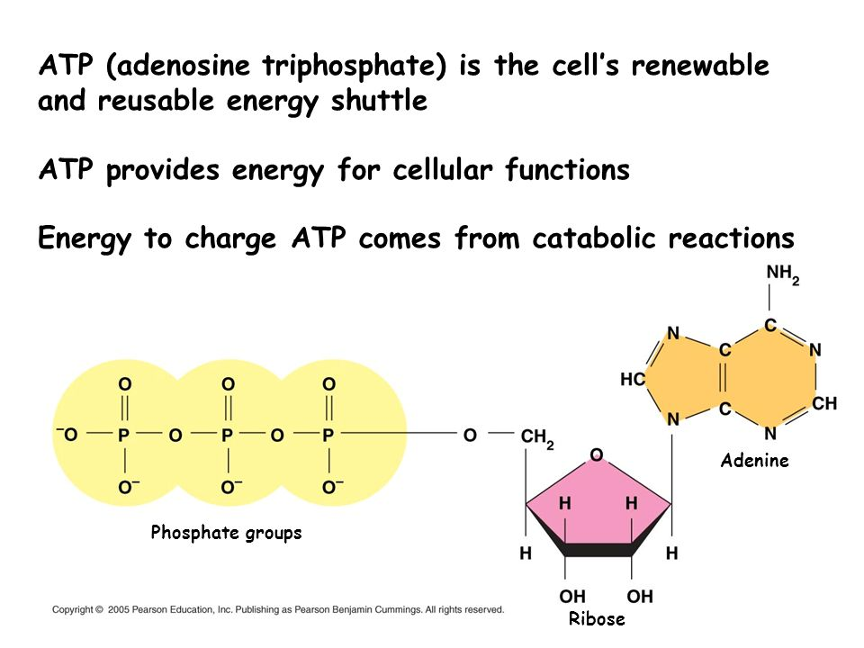 ATP provides energy for cellular functions