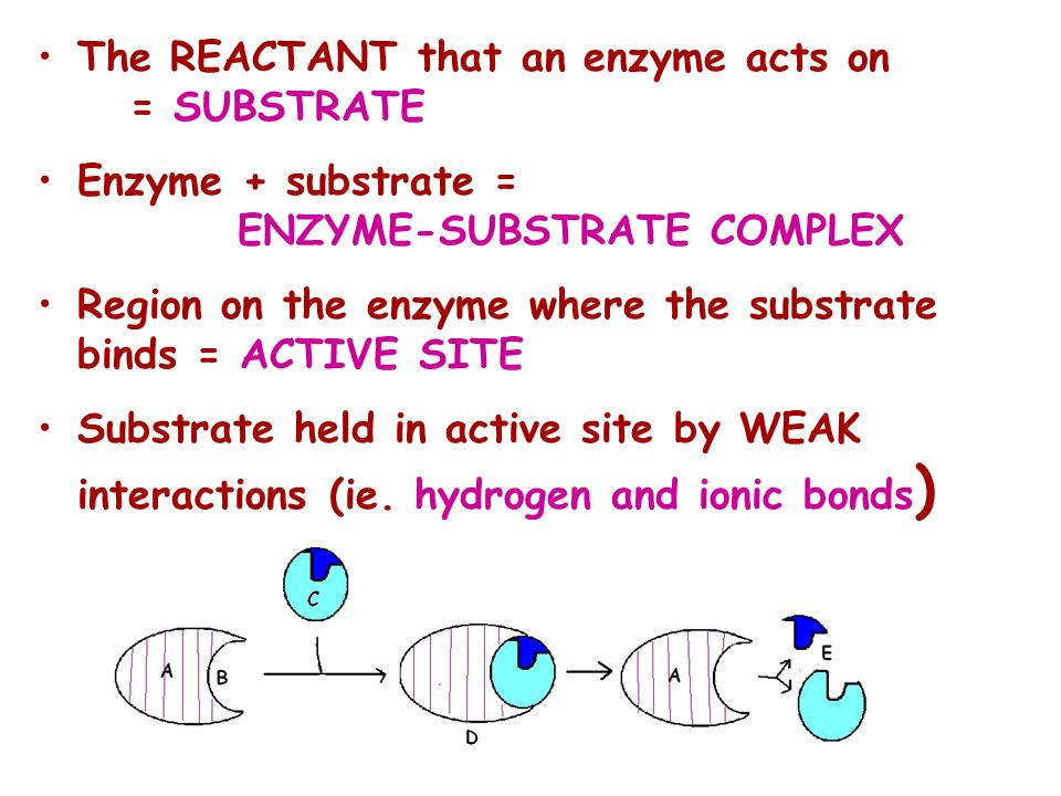 The REACTANT that an enzyme acts on = SUBSTRATE
