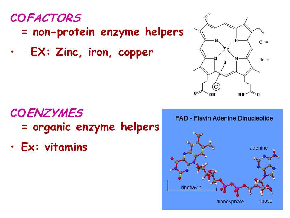 COFACTORS = non-protein enzyme helpers