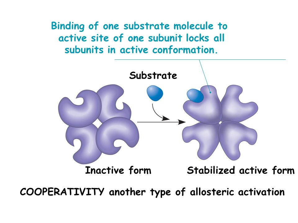 Binding of one substrate molecule to
