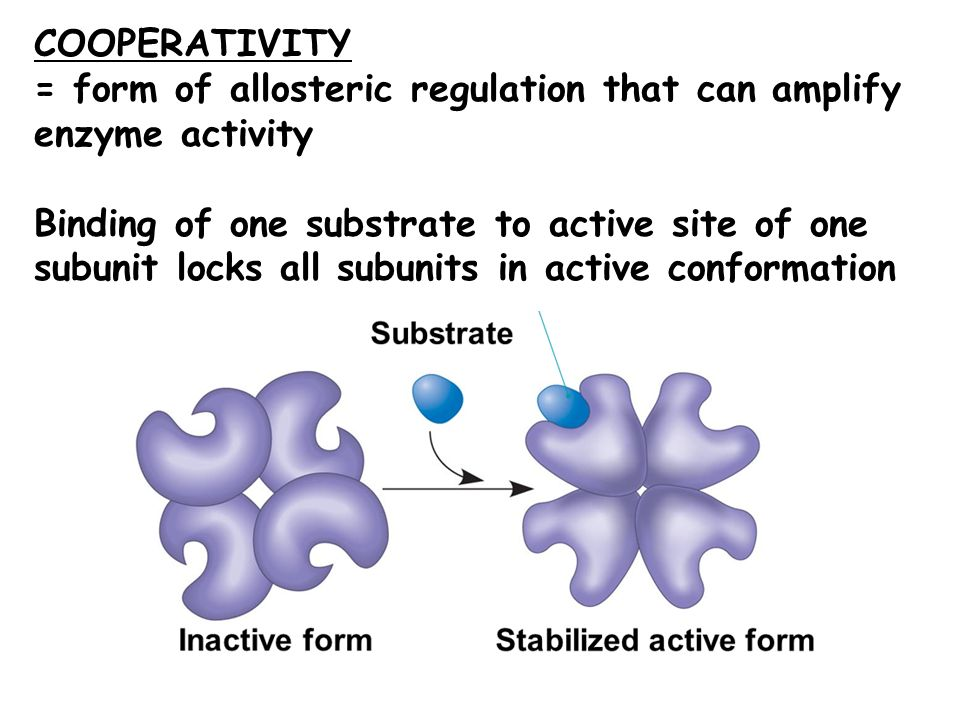 COOPERATIVITY = form of allosteric regulation that can amplify