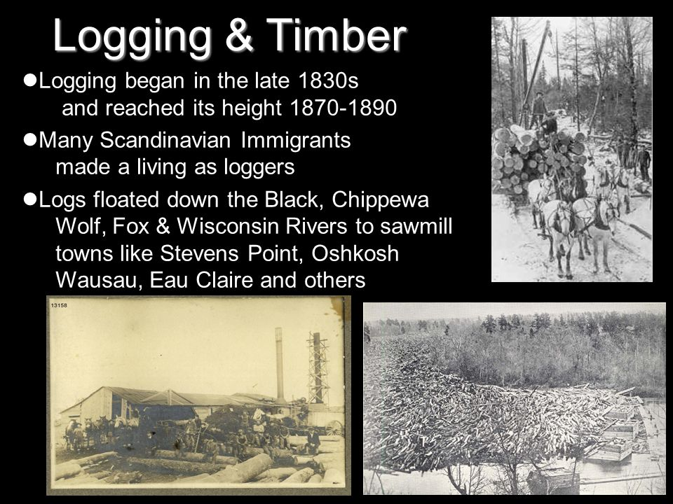 Logging & Timber Logging began in the late 1830s and reached its height 1870-1890. Many Scandinavian Immigrants made a living as loggers.