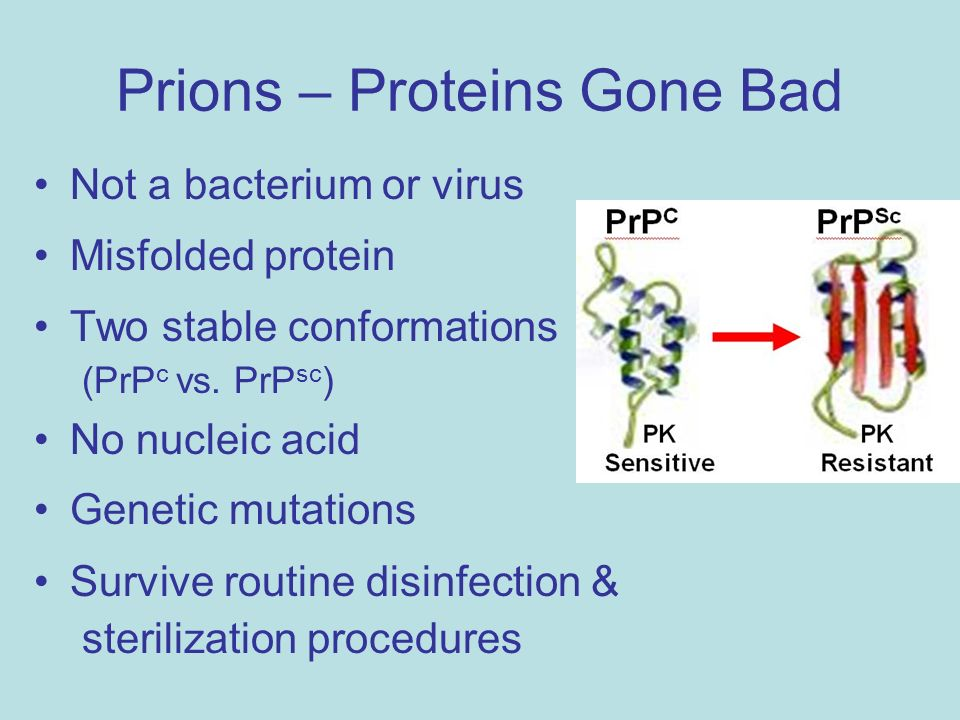 prions proteins as genes and infectious Scientists from the scripps research institute have discovered that prions -- tiny  infectious bits of protein that can cause deadly.