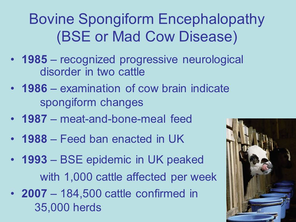 bovine spongiform encephalopathy mad cow disease essay Spongiform encephalopathy mad cow disease, an infected ani  bovine spongiform encephalopathy (bse) is a fatal neurodegenerative  prions in bovine.