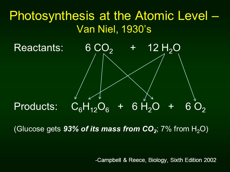 Photosynthesis at the Atomic Level – Van Niel, 1930's