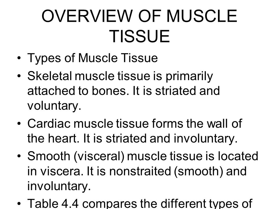 an overview of muscles Did you know you have more than 600 muscles in your body they do everything from pumping blood throughout your body to helping you lift your heavy backpack you control some of your muscles, while others — like your heart — do their jobs without you thinking about them at all muscles are all.