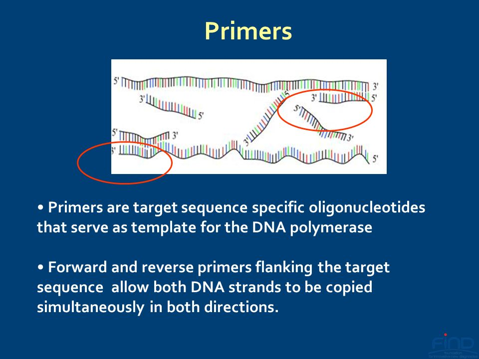 Primers Primers are target sequence specific oligonucleotides that serve as template for the DNA polymerase.