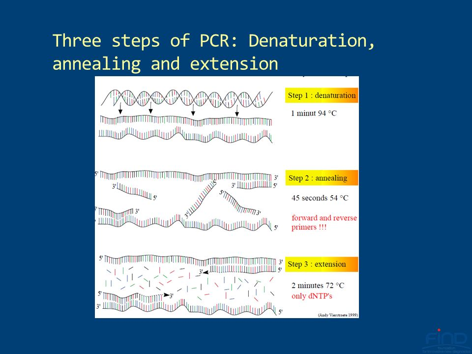 Three steps of PCR: Denaturation, annealing and extension
