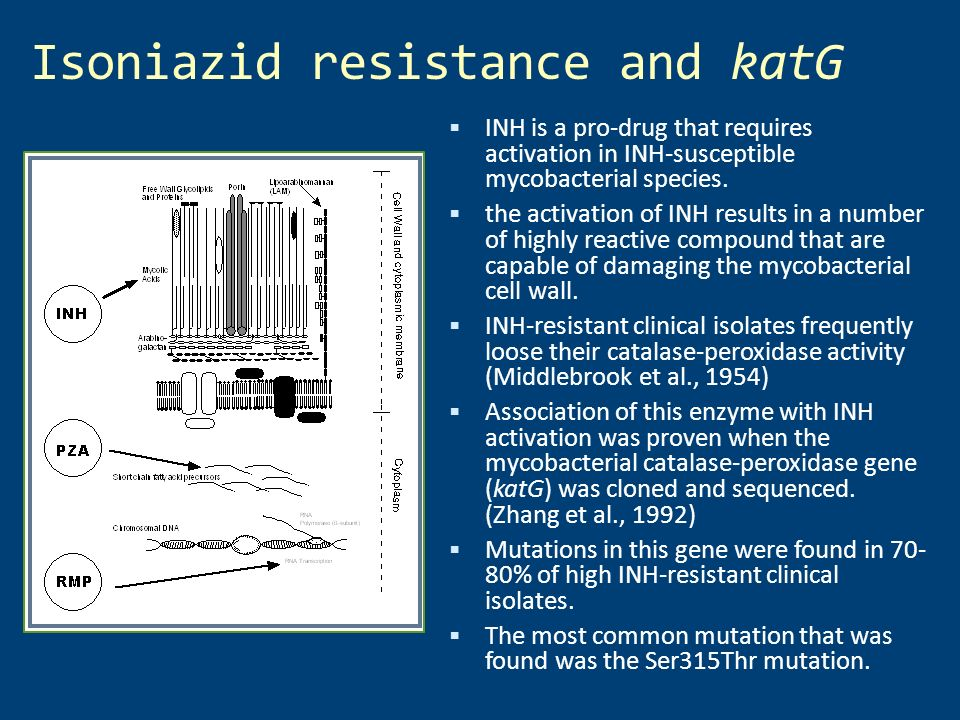 Isoniazid resistance and katG