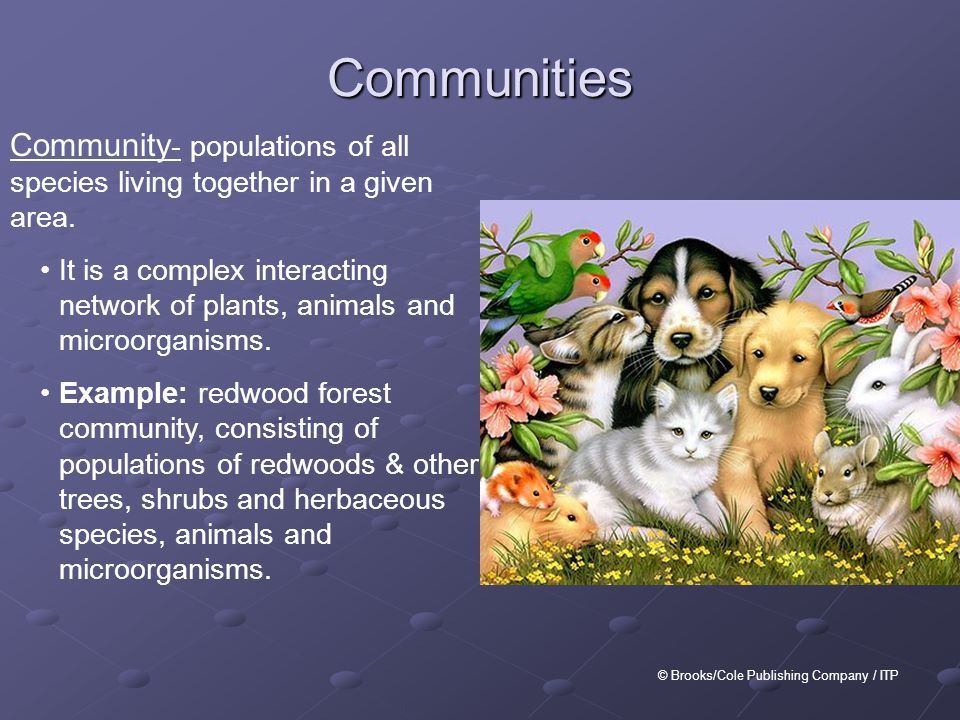 AP Environmental Science Ecology, Ecosystems, & Food Webs ...